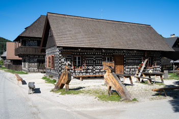 Mangrove tree at Cape Tribulation, Queensland, Australia
