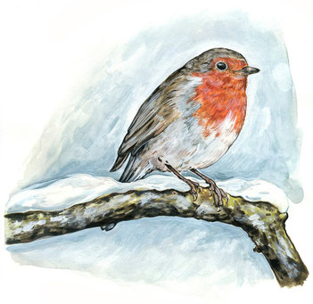 Illustration Rotkehlchen im Schnee © Caroline Ronnefeldt