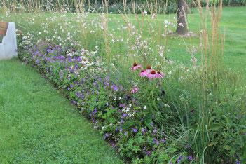 Garten mit Staudenhecken, Gräser, Sonnenhut, Storchenschnabel, Amriswil