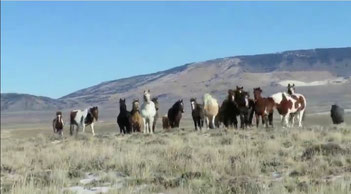 "The ""Big Band"" - Photo Credit : wyomustangs.org"