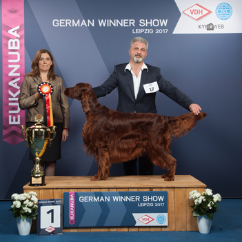 Best of Group German Winner Leipzig 2017 Irish Setter Guardian Angel the Irish Spirit of Nature (Milow)