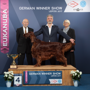 Best in Show German Winner Leipzig 2017 Irish Setter Guardian Angel the Irish Spirit of Nature (Milow)