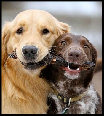 Prendre un deuxième chien
