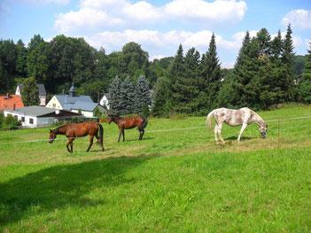 Pferde in Dittersdorf