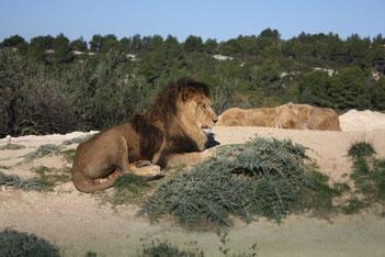 Парки и зоопарк Валенсии