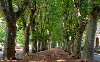 Деревья в Барселоне - легенды и факты