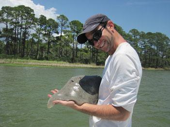 G. micrura in Alligator Harbor, FL