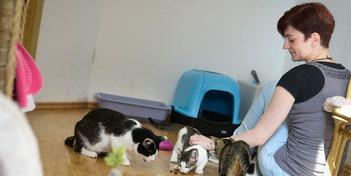 Die Kinderstube in der Katzen-WG. Hier spielt Tina Rückert mit den Katzenkindern. Foto:  Heiko Rebsch