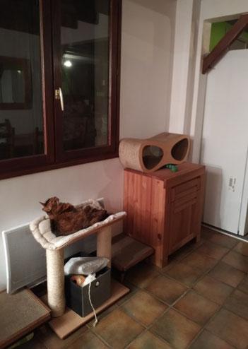 Des griffoirs et un poste d'observation sous la fenêtre, ainsi qu'un accès au dessus du frigo
