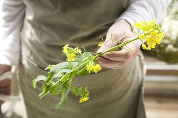 小松菜を育て続けてできた菜の花