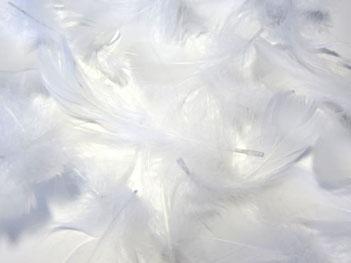 天使がいるサイン、合図