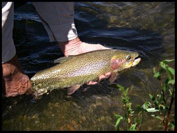 Ed rilascia una rainbow nelle acque del South Platte River