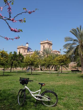 Turia Fahrrad fahren Bellas Artes Kunstmuseum Garten