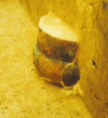 Totenurne 1000 v.Chr.