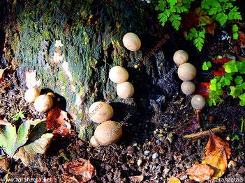 Pilze am Baumstamm im Herbst