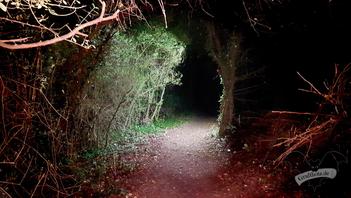 Der Weg zur Burg / Foto: CorviNox