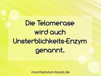 Die Telomerase wird auch Unsterblichkeits-Enzym genannt.