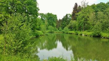 Fischen am Weiher in Altenbuch!