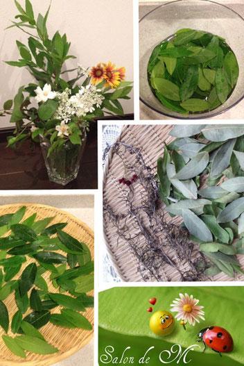 月桂樹 ローリエ 作り方 レシピ
