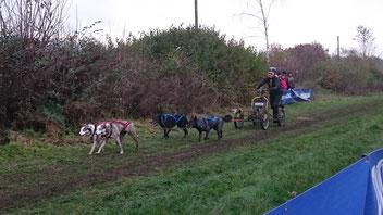 Gespann mit vier Hunden