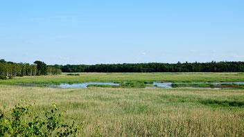 Blick auf die wassergesättigten Radelwiesen. Quelle: NABU RV MM e.V.