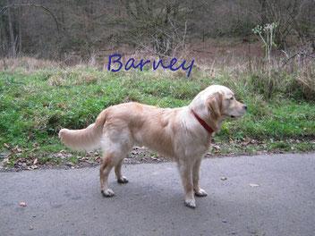 Bei Bruder Barney ist zum Zeitpunkt des Fotografierens noch kein Schnee angekommen