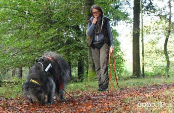 GOOD DOGS Hundeschule - Rodgau - Obertshausen - Heusenstamm - Schleppleine - Erziehung