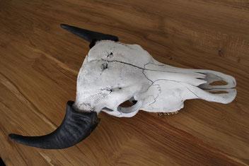 Schädel: weiß - Hörner: schwarz-matt