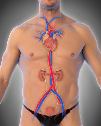 Aortenaneurysma sind lange unentdeckt