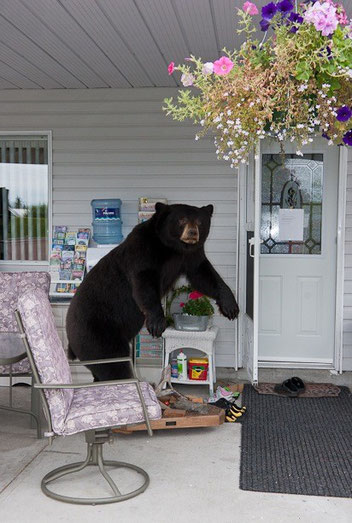 "Bear with Chair by Gisela Obscura Photography aus der Serie ""L.A."", 2005"