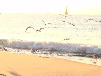 明日から3連休ですね~!波は無くても、パドリング定例会もやりますよ(^_^)/