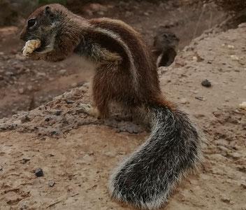 Atlashörnchen lieben Joghurt Riegel