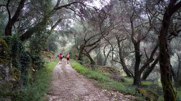 Wanderfreuden im Olivenhain