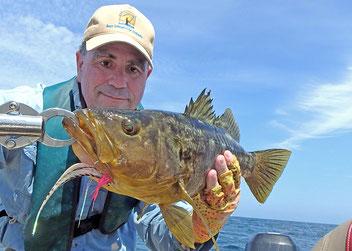Calico bass caught using Rio Striper Line