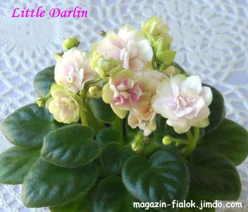 Little Darlin(S.Sorano)