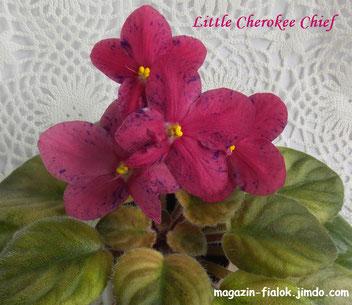 Little Cherokee (P. Sorano/LLG)