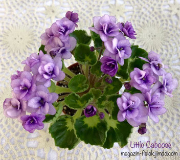 Little Caboose (H.Pittman)