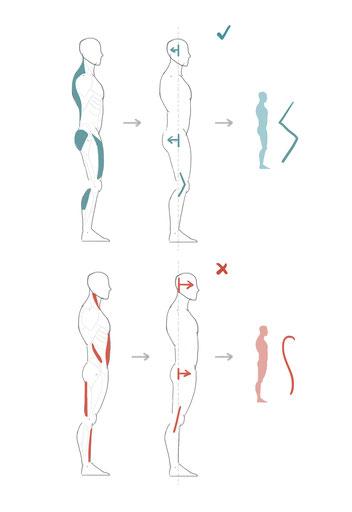 Ein Rundrücken entsteht durch falsche Anspannung im gesamten Körper und insbesondere in den Bauchmuskeln!