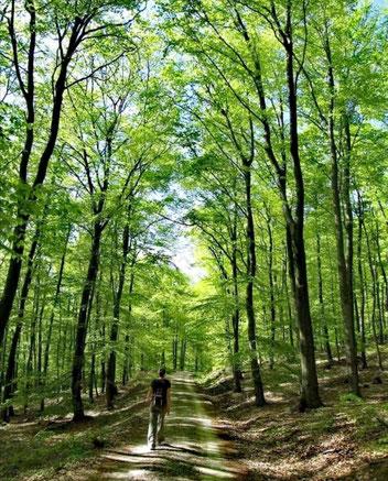 Forêt du Taunus
