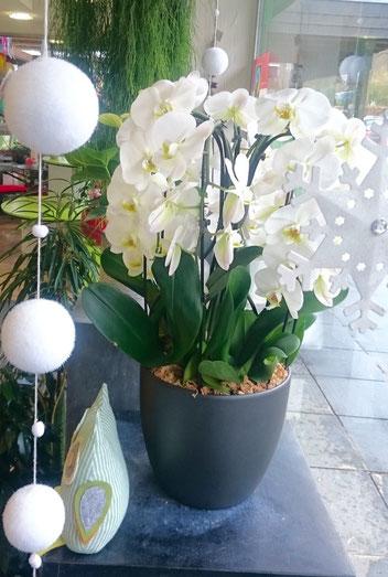 Pflege Orchideen Blumen Rickenbach Ek Blumen Für Koblenz