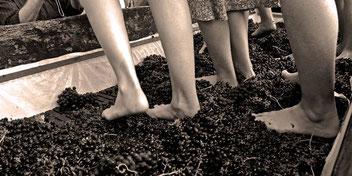 S.liuz1 Italia, spremitura dell'uva