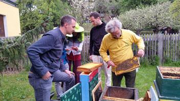 Viele Jungimker, Schüler und Bienen-Interessierte blickten IM Pak Erich am Bienenstand der VS Gmünd begeistert über die Schulter