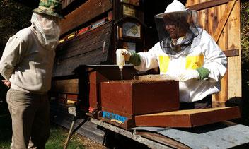 Praktische Restentmilbung gegen die Varroa-Milbe