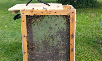 Bienenschwärme werden in Schwarmkisten eingefangen