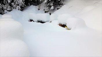 Gegen tiefe Temperaturen schützt auch eine Schneedecke, sofern das Flugloch frei bleibt
