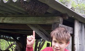 An den unglaublichsten Stellen kann man Bienenbärte vorfinden