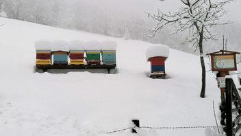 Unnötige Störungen sollten während der Wintermonate vermieden werden