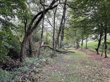 Das Totholz am Holzbach ist auf der anderen Seite wichtig für den Lebensraum vieler Tiere und Organismen.