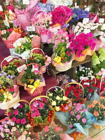 母の日 もうすぐ 花ひろ はなひろ hanahiro 福井の花屋 鯖江の花屋