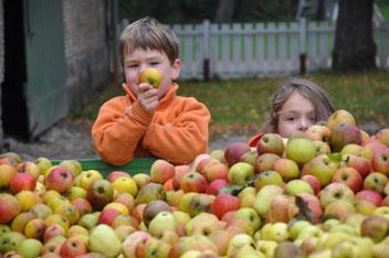 Apfelwochen Ferienbauernhof Neu-Rehberg Urlaub auf dem Bauernhof